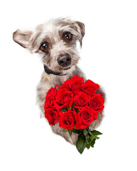 Crossbreed Wall Art - Photograph - Cute Dog With Dozen Red Roses by Susan Schmitz