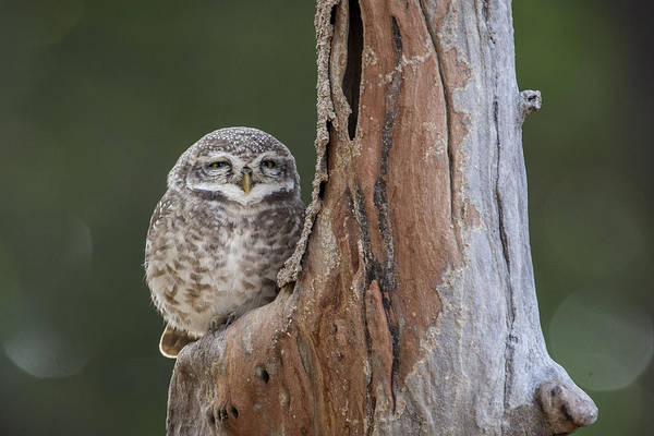 Photograph - Cute by Hitendra SINKAR