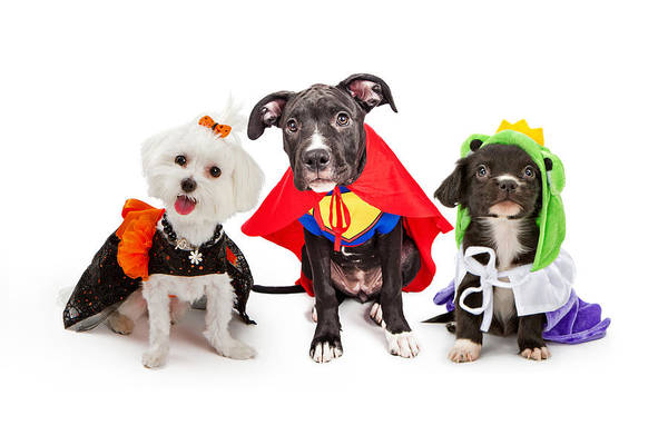 Dog Treat Photograph - Cute Puppy Dogs Wearing Halloween Costumes by Susan Schmitz