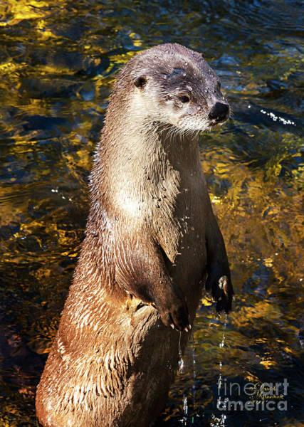 Photograph - Cute Sea Otter, Animal Decor, Nursery Decor, Otter Phone Case, Otter Throw Pillow, Otter Gift,  by David Millenheft