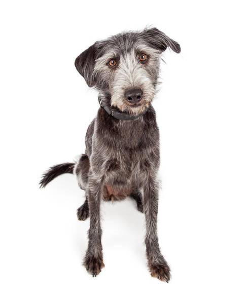 Canine Photograph - Cute Terrier Crossbreed Dog Sitting by Susan Schmitz