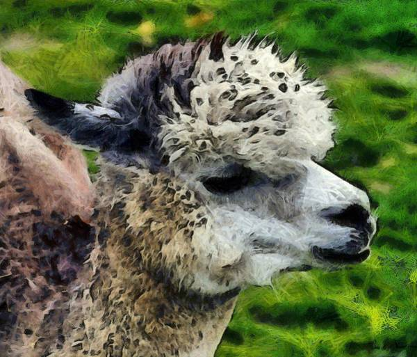 Photograph - Cute Warm And Fuzzy Alpaca by Barbara Snyder