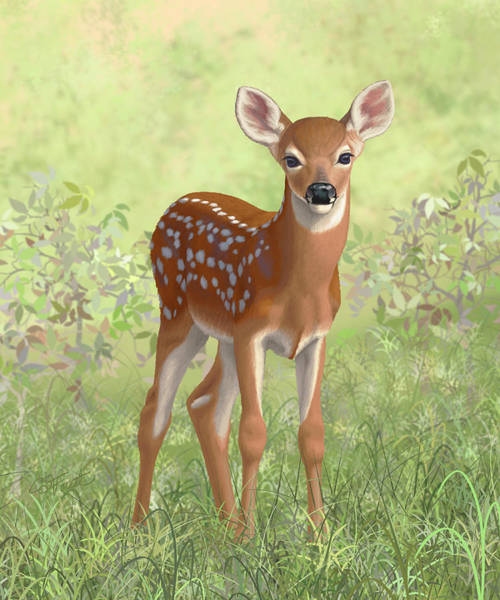 Fawn Painting - Cute Whitetail Deer Fawn by Crista Forest