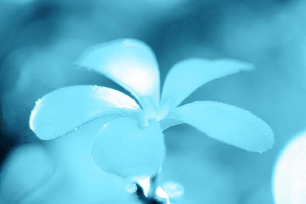 Plumeria Photograph - Aqua Petals by Sean Davey