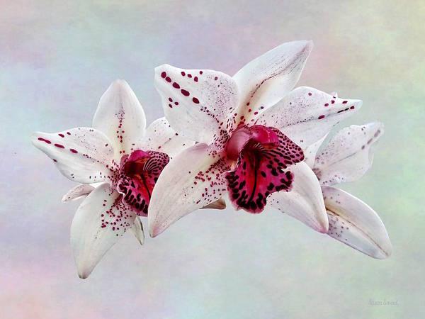Photograph - Cymbidium Baltic Dew Freckle Face by Susan Savad