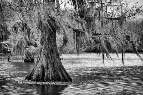 Photograph - Cypress At Caddo Lake by Mary Lee Dereske