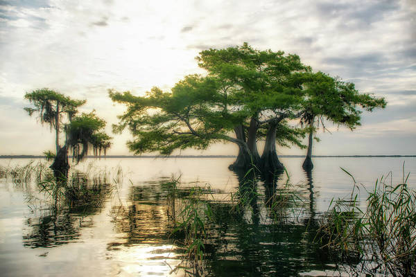 Photograph - Cypress Bonsai by Ghostwinds Photography
