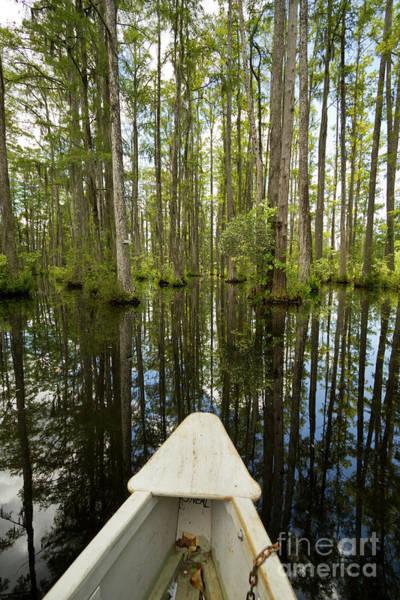 Cypress Gardens Photograph - Cypress Garden Swamp by Dustin K Ryan