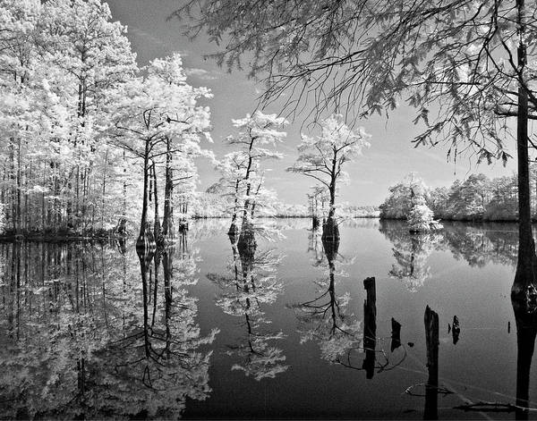 Photograph - Cypress In Walkers Mill Pond by Bob Decker