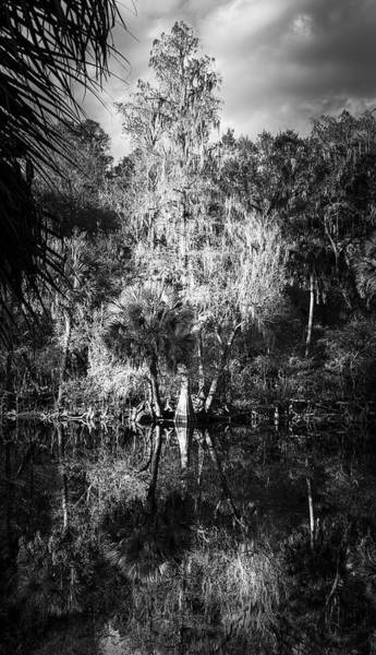 Wall Art - Photograph - Cypress King by Marvin Spates