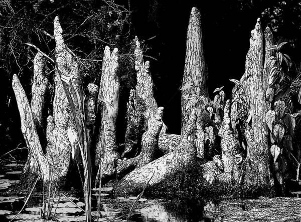 Cypress Knees Photograph - Cypress Knee's by Lisa Scott
