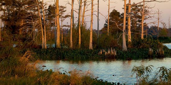Wall Art - Photograph - Cypress Stand At Sunset Venice Louisiana by Paul Gaj