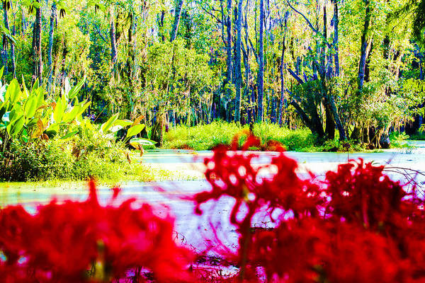 Photograph - Cypress Swamp by Stacey Rosebrock
