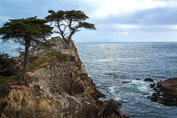 Photograph - Cypress Tree On The Point by Rick Strobaugh