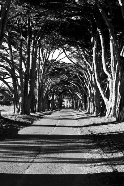 Photograph - Cypress Tree Tunnel by Brad Hodges