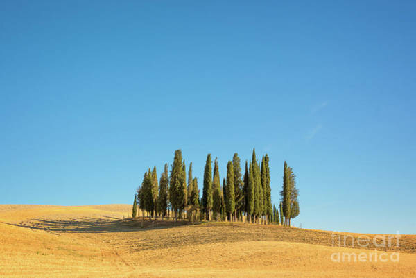 Cypress Photograph - Cypress Trees by Delphimages Photo Creations