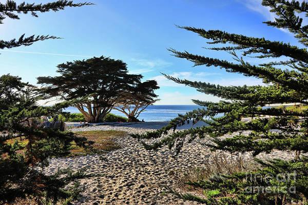Carmel By The Sea Photograph - Cypress Trees Landscape Carmel California  by Chuck Kuhn