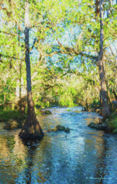 Bald Cypress Wall Art - Photograph - Cypress Trees On The River by Marvin Spates