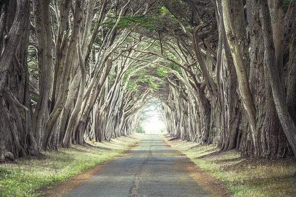Photograph - Cypress Tunnel by Alexander Kunz