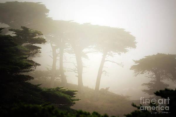 Photograph - Cyprus Tree Grove In Fog by Craig J Satterlee