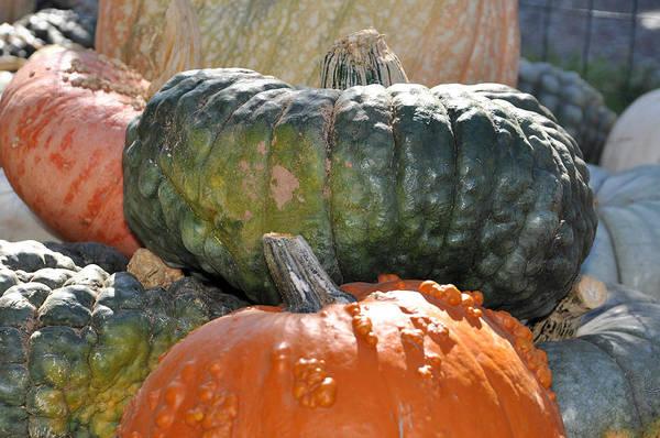 Photograph - Czar Pumpkin by Teresa Blanton