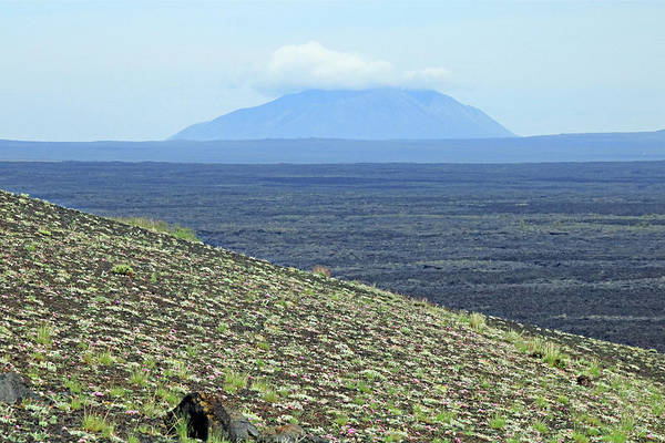 Photograph - D07786 Flowers On Cinder Cone Slopes With Big Southern Butte by Ed Cooper Photography