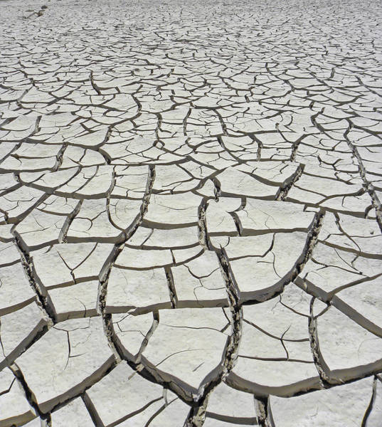 Photograph - D17845-dried Mud Patterns  by Ed  Cooper Photography