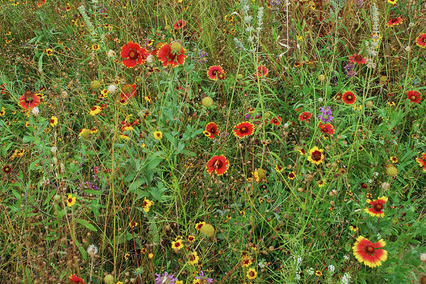 Photograph - D1m-1 Field Of Flowers by Ohio Stock Photography