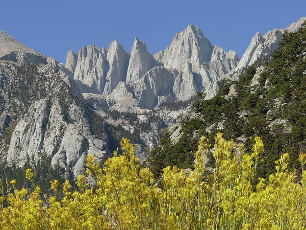 Photograph - D2m6450 Mt. Whitney And Rabbit Brush by Ed Cooper Photography