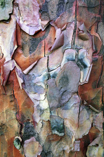 Wall Art - Photograph - Tree Bark Delight by Jessica Jenney
