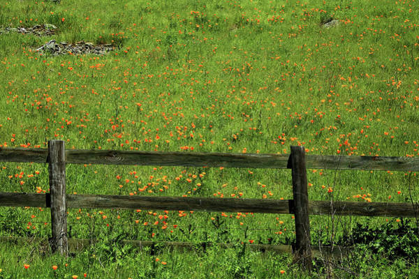 Photograph - D7b6306 Fence And Poppies by Ed Cooper Photography