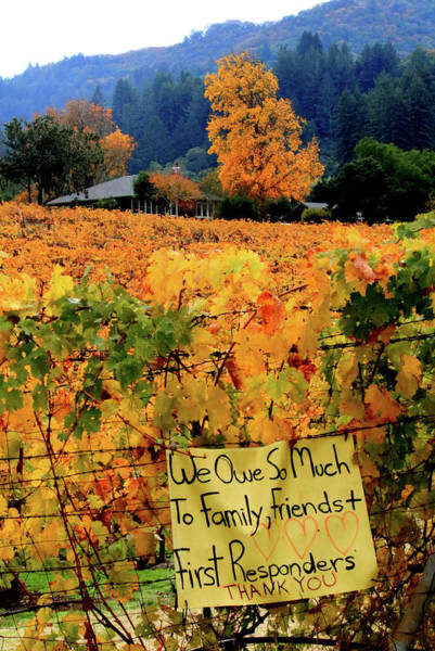 Photograph - D8b6314 Autumn At Jack London Vinyard With Thanks To Firefighters Ca by Ed Cooper Photography