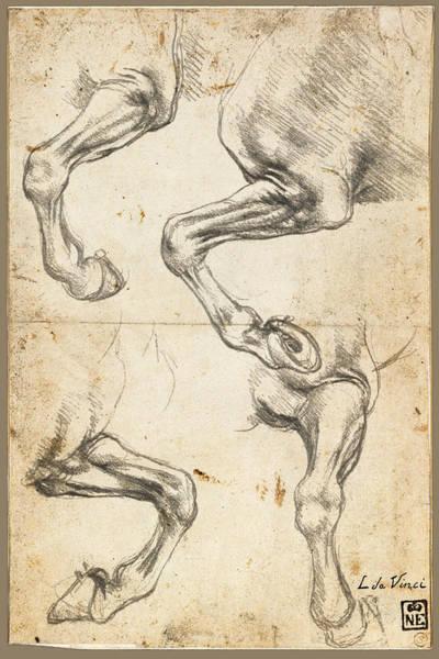 Painting - Da Vinci Horse Leg Study By Da Vinci by Tony Rubino