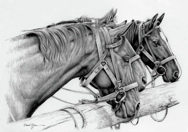 Wall Art - Drawing - Da158 3 Horses Daniel Adams  by Daniel Adams