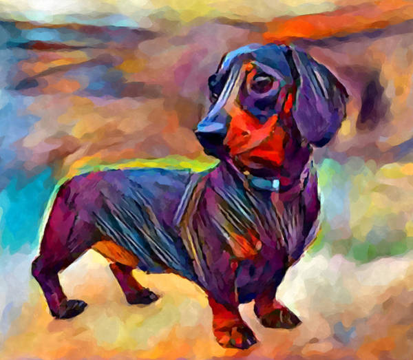 Wall Art - Painting - Dachshund by Chris Butler
