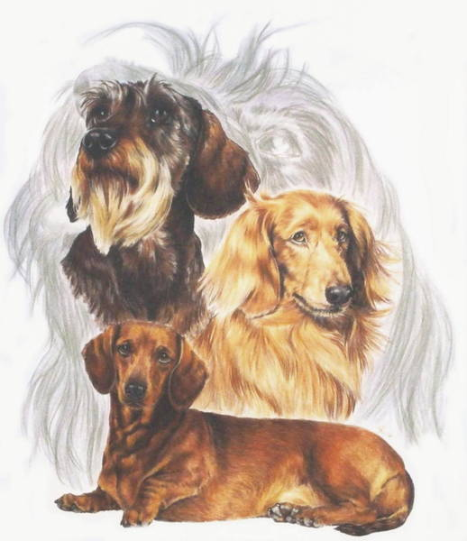 Drawing - Dachshund Grouping by Barbara Keith