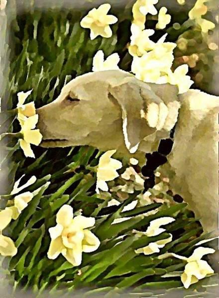 Wall Art - Digital Art - Daffodil Dog by Raven Hannah