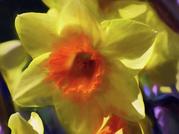 Mixed Media - Daffodil Gold by Lynda Lehmann