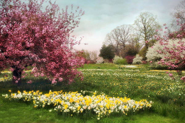 Daffodils Photograph - Daffodil Meadow by Jessica Jenney