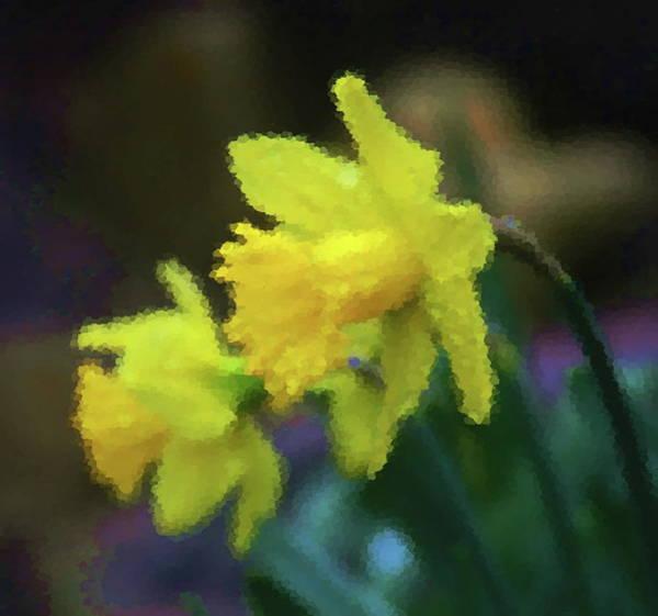 Dafodil Photograph - Daffodil Pair 3 by Cathy Lindsey