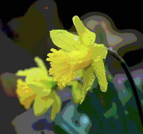Dafodil Photograph - Daffodil Pair 4 by Cathy Lindsey