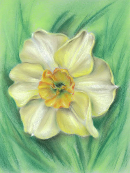 Photograph - Daffodil Spring Floral by MM Anderson