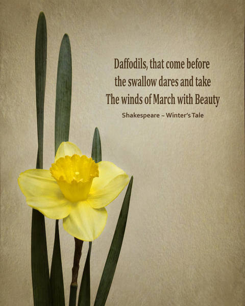 The Harbinger Photograph - Daffodil - Spring by Nikolyn McDonald