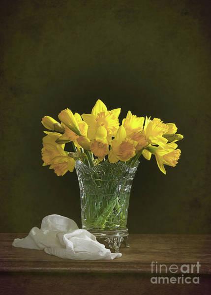 Wall Art - Photograph - Daffodil Still Life by Amanda Elwell