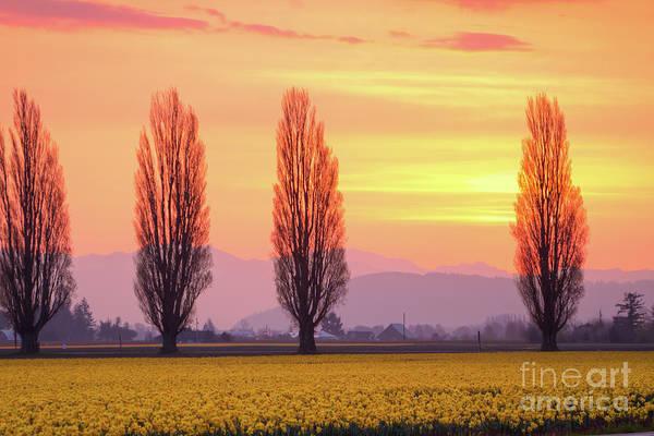 Dafodil Photograph - Daffodil Sunrise by Idaho Scenic Images Linda Lantzy
