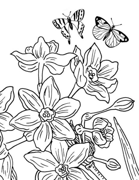 Drawing - Daffodils And Butterflies Drawing by Irina Sztukowski