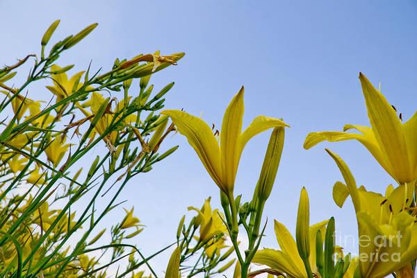 Dafodil Photograph - Daffodils by Rob Byron
