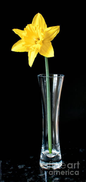 Photograph - Daffoil In Vase by Colin Rayner
