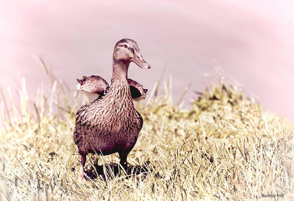 Photograph - Daffy The Duck by Bonnie Willis