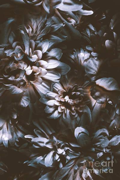 Overlay Photograph - Dahlia Abstraction by Jorgo Photography - Wall Art Gallery
